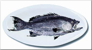FishPlatters/Scamp.JPG