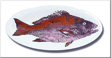 FishPlatters/Snapper.JPG